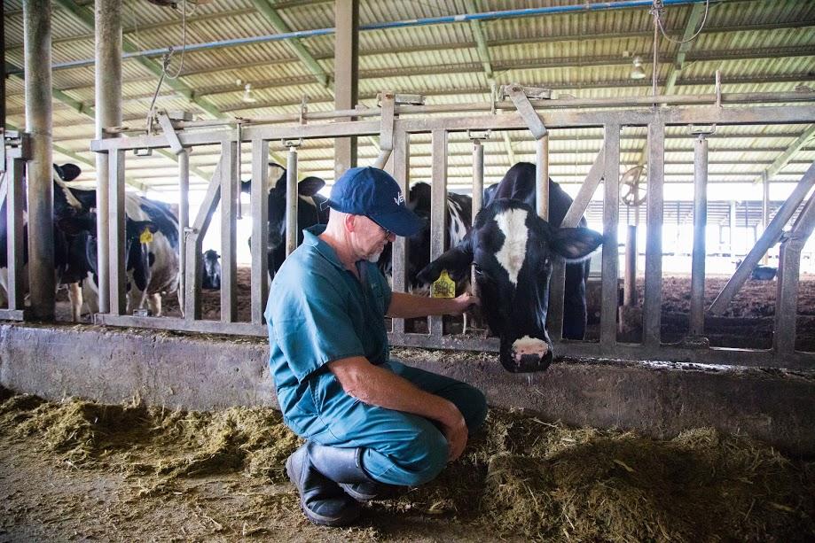 """Sữa tươi sạch TH true MILK A2, """"quả ngọt"""" của nông nghiệp công nghệ cao 1"""