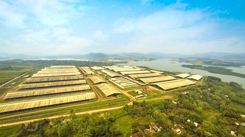 """Công nghệ 4.0 biến vùng đất nghèo thành """"thủ phủ bò sữa"""" 2"""