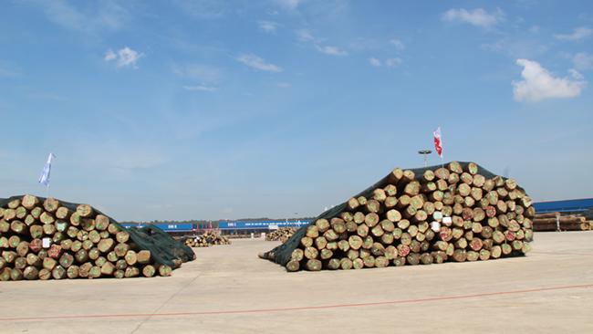 Khám phá khu phức hợp cung ứng ngành gỗ lớn nhất miền Nam 2