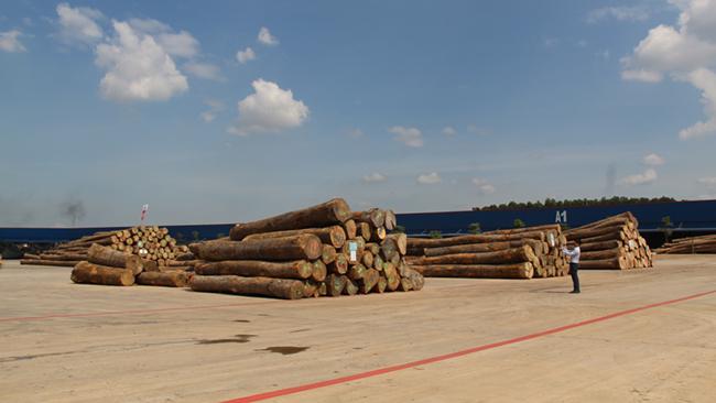 Khám phá khu phức hợp cung ứng ngành gỗ lớn nhất miền Nam 4