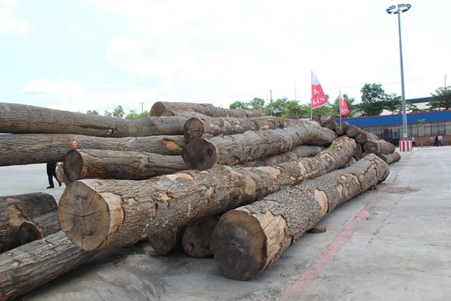 Khám phá khu phức hợp cung ứng ngành gỗ lớn nhất miền Nam 5