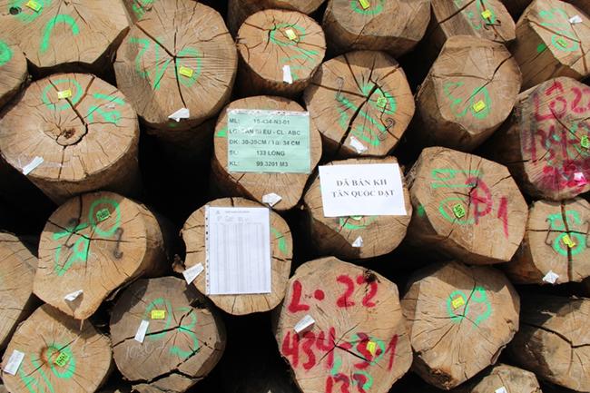 Khám phá khu phức hợp cung ứng ngành gỗ lớn nhất miền Nam 6