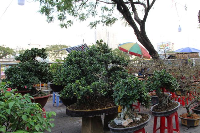 Chợ hoa 'trên bến dưới thuyền' 13