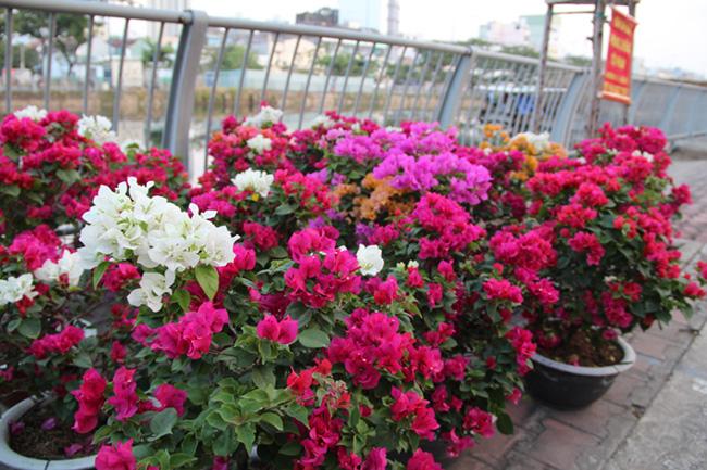 Chợ hoa 'trên bến dưới thuyền' 10
