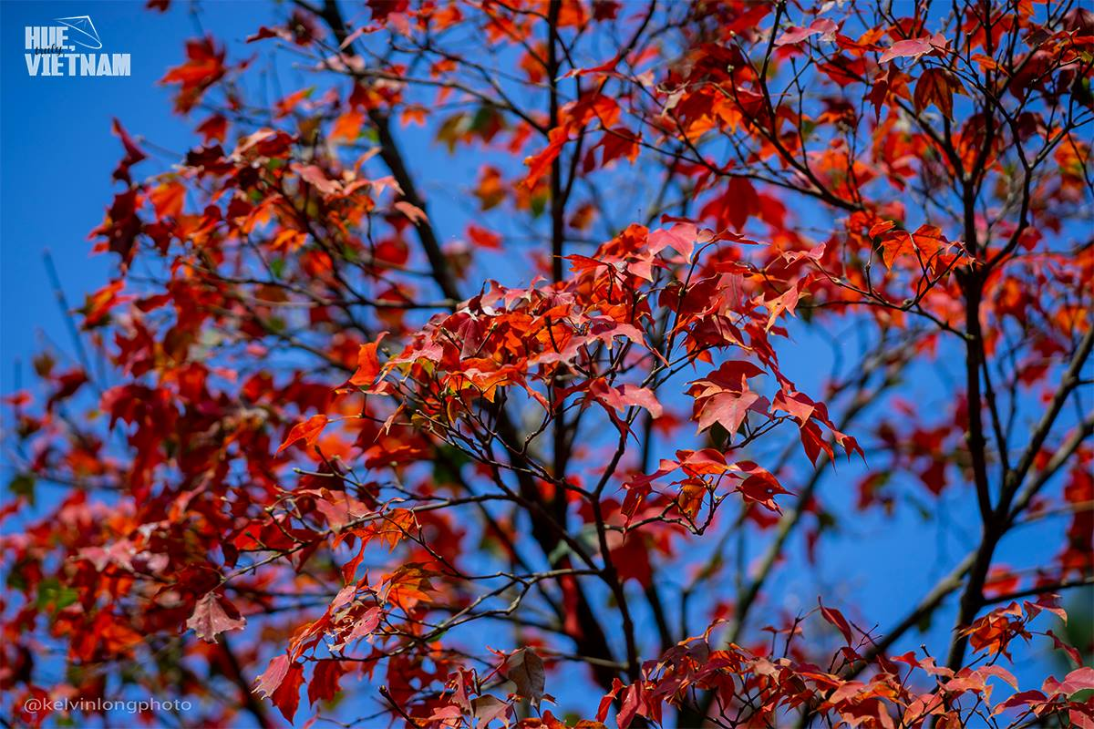 Hương sắc xuân trên đỉnh Bạch Mã 9