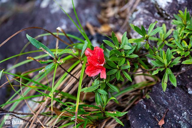 Hương sắc xuân trên đỉnh Bạch Mã 3