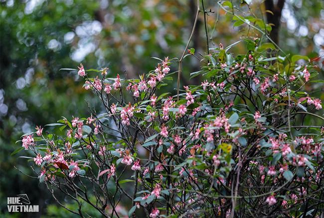 Hương sắc xuân trên đỉnh Bạch Mã 5