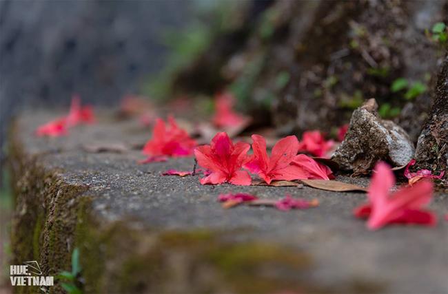 Hương sắc xuân trên đỉnh Bạch Mã 4