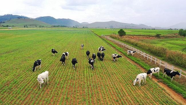 Tổ hợp trang trại Vinamilk tại Lào dự kiến đi vào hoạt động đầu năm 2022 4